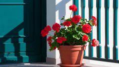 Выбираем растения для дома с умом