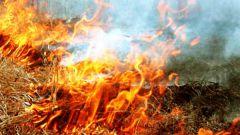 Как влияет на окружающую среду сжигание сухой травы