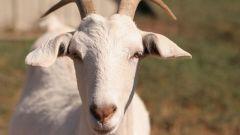 Год какого животного будет в 2015 году