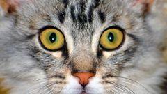 Можно ли оставить наследство своему коту