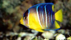 Аквариумные рыбки: самые интересные имена