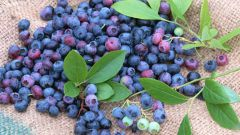 How to preserve blueberries for winter