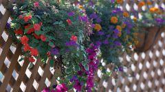 Как сделать решетку для вьющихся растений