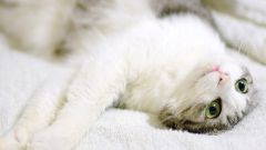 How to treat coronavirus in cats