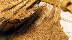 Как приготовить отвар из пшеничных отрубей