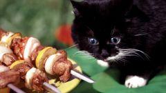 Сколько корма надо котенку