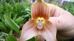Что изучает ботаника