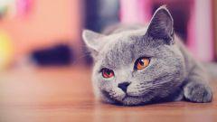 Как вылечить язву у кошки