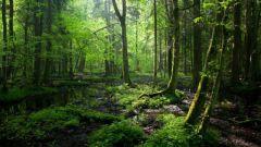 От чего зависит устойчивость экосистемы