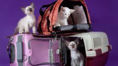 Как выбрать сумку-переноску для кошки