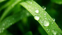Зачем нужны листья растению