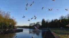 Как сделать ловушку для насекомых