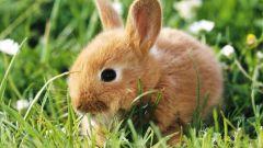 Как завести кролика