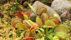 Какие растения питаются живыми организмами