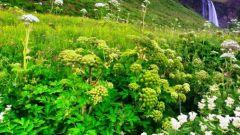 Лекарственные растения для борьбы с избыточным весом