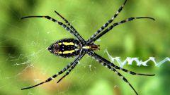 Как бороться с пауками на даче