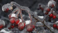 Как образовывается ледяной дождь