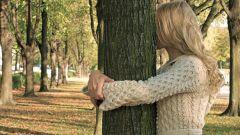Как заряжаться энергией от деревьев