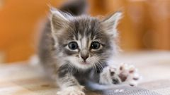 When to give a kitten dry food