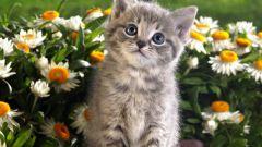 Сонник: к чему снятся котята