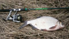 The secrets of fishing: bait for bream with his own hands