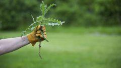 Что такое гербициды сплошного действия