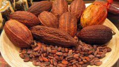 Сколько хранится какао