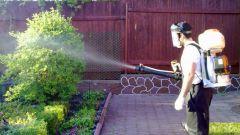 Как применять бордосскую жидкость в садоводстве