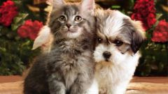 Как написать объявление о продаже котят или щенков