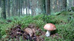 Разновидности грибов и их полезные свойства