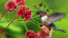 Как рождаются птенцы колибри