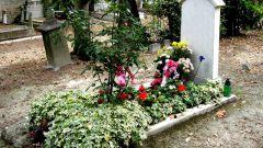 Сонник: к чему снятся могилы