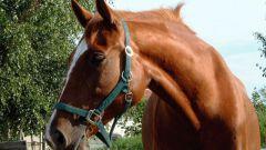 К чему снится лошадь