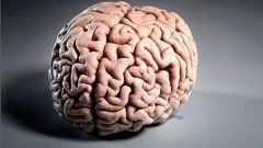Как устроен мозг человека