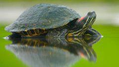 Empties into hibernation pond slider turtles