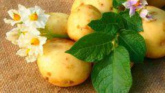 Какие удобрения повышают урожайность картошки