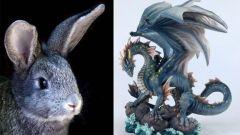 Восточный гороскоп совместимости: Дракон и Кролик