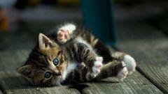 Какой препарат против ушных клещей для котят выбрать