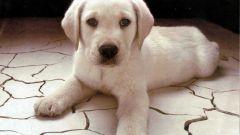 Как помочь собаке избавиться от лишая