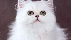 Зачем кошке второе веко