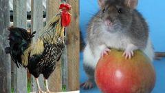 Восточный гороскоп совместимости: Крыса и Петух
