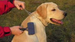 Начинающим собаководам: 7 главных правил ухода за собакой