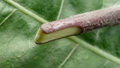 Что такое прививка растений