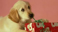 Восточный гороскоп: что ждет родившихся в год Собаки