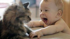 Как быть с кошкой, если в доме новорожденный ребенок