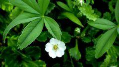 Какие травы применять для нормализации функции щитовидной железы