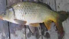 Секреты рыбалки: блесна на жереха