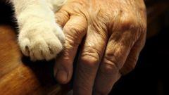 Как рассчитать соотношение возраста кошки с человеческим