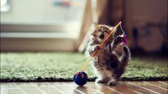 Как сделать бантик из бумаги для кошки