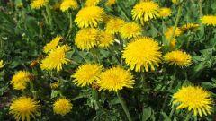 Какое растение называют живым барометром